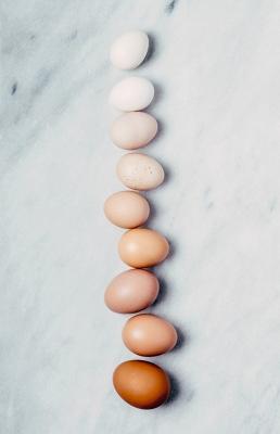 Bild: verschieden farbige Eier in einer Reihe