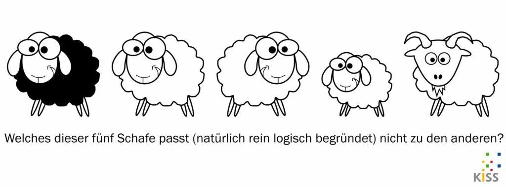 Bild: verschiedene Schafe
