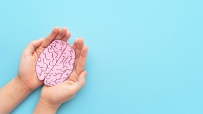 Bild: Zwei Hände halten ein gezeichnetes Gehirn